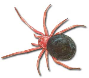 red n black spider - Pictures Of Spiders To Colour In